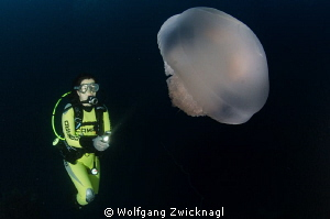 Nice Jellyfish met during a deep dive. by Wolfgang Zwicknagl